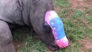 ataque-rinoceronte