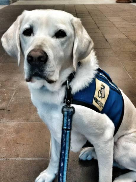 Caber-perro-policia