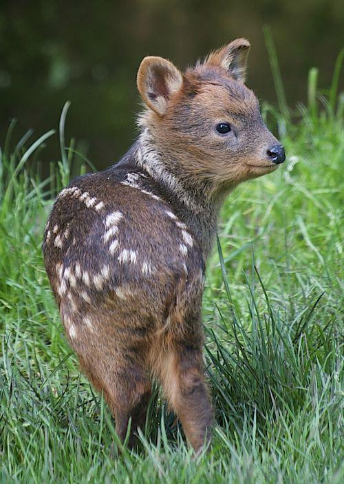 ciervo bebe 2