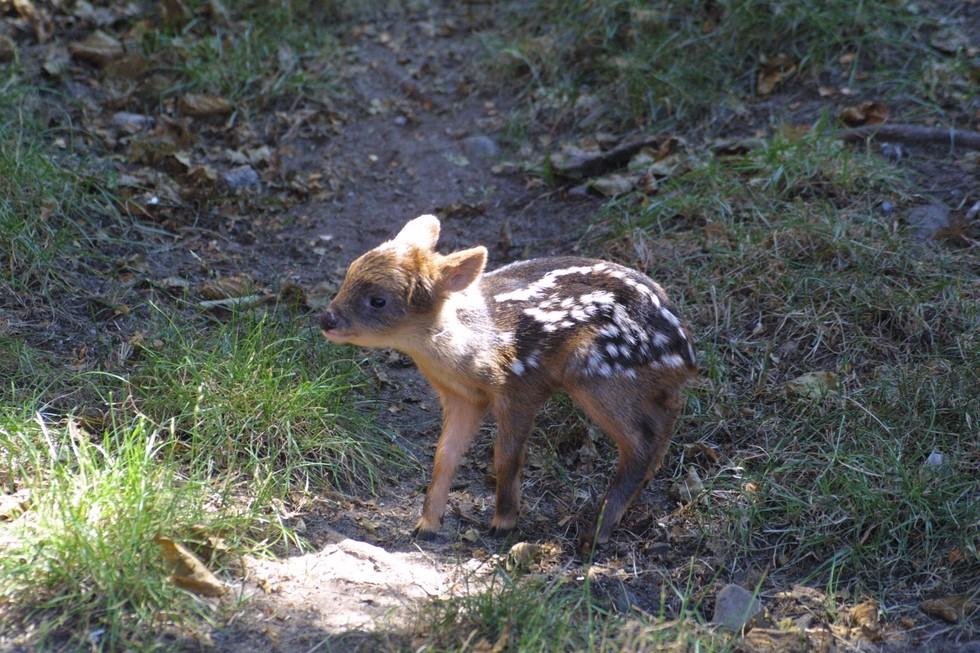 ciervo bebe 3