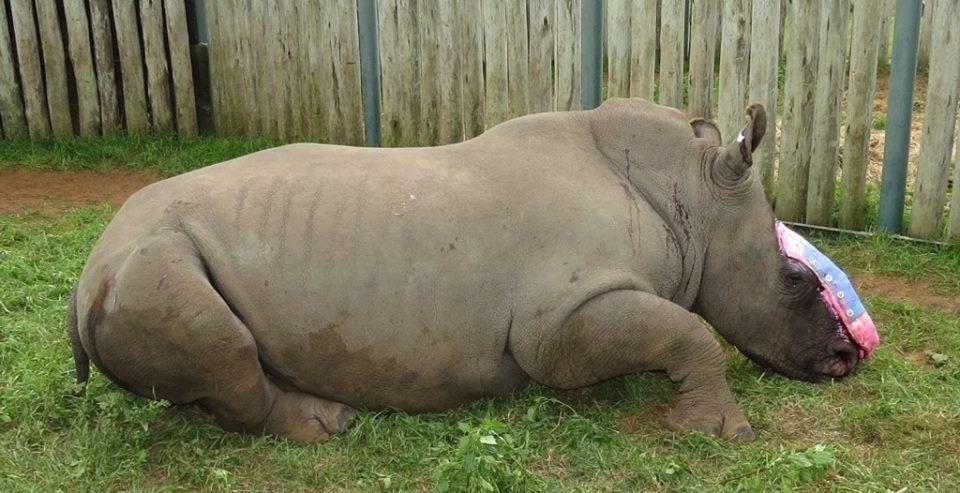 cuidado-rinoceronte