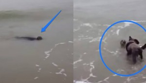 foca juega con perro id