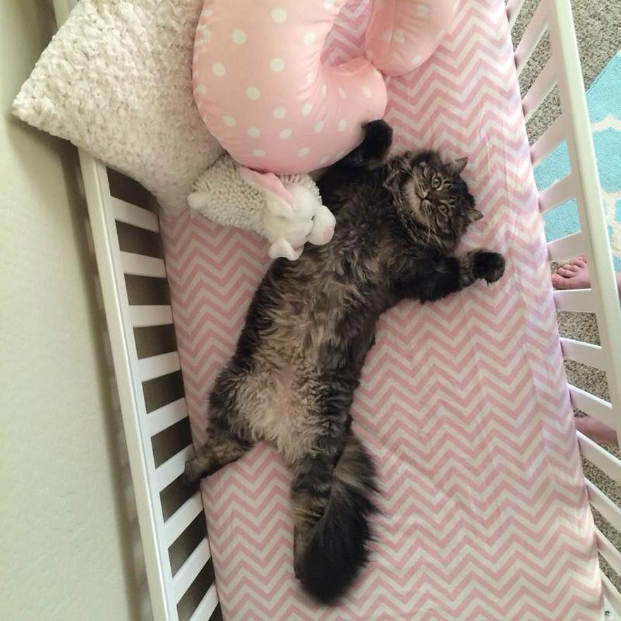 gato-cuna