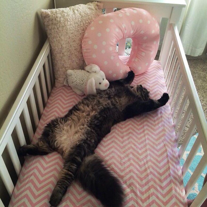 gato-duerme-cuna