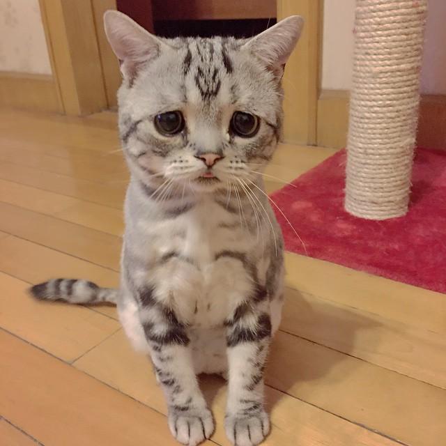 gato5