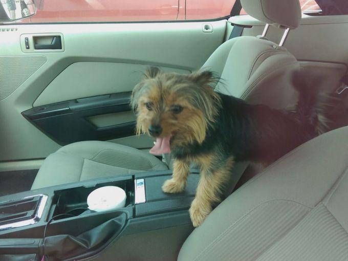 hombre salva perro de auto 1