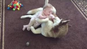 husky juega con bebe Cropped