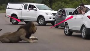 leon ruge a turistas