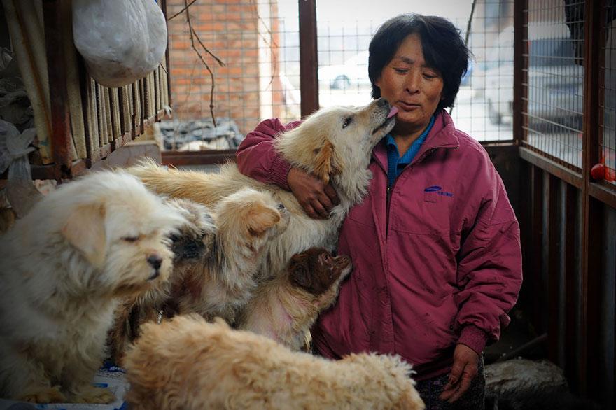 mujer salva perros 1
