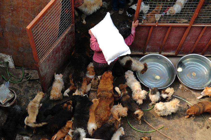 mujer salva perros 13