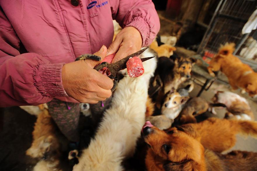 mujer salva perros 16