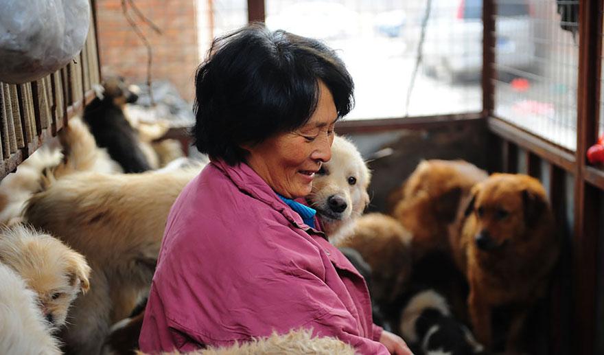 mujer salva perros 17