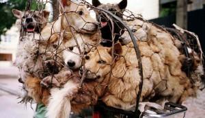 mujer salva perros 2