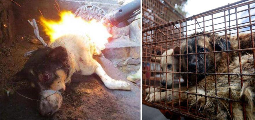 mujer salva perros 3