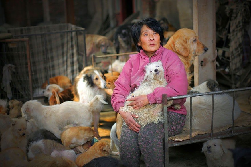 mujer salva perros 4