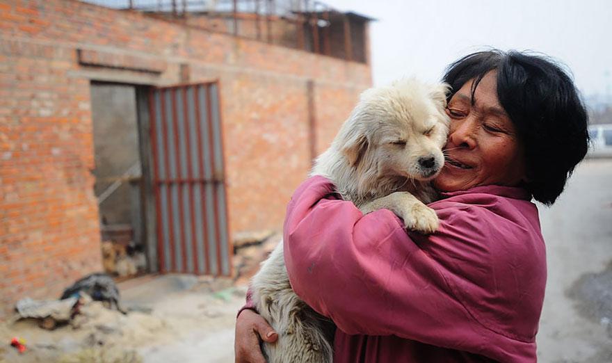 mujer salva perros 8