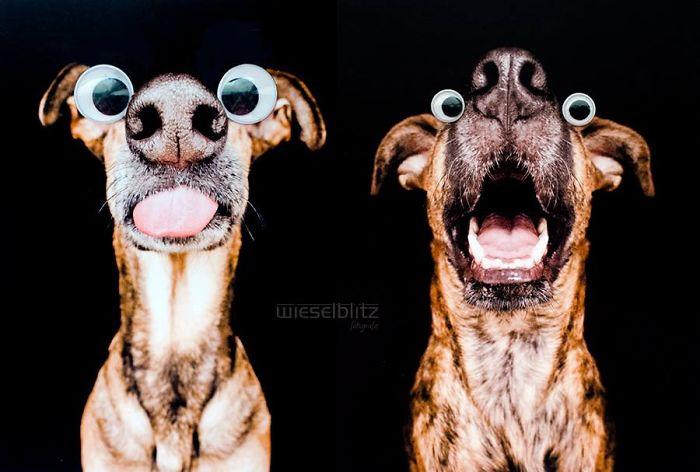 perros expresivos 12