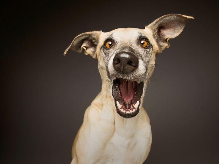 perros expresivos 13