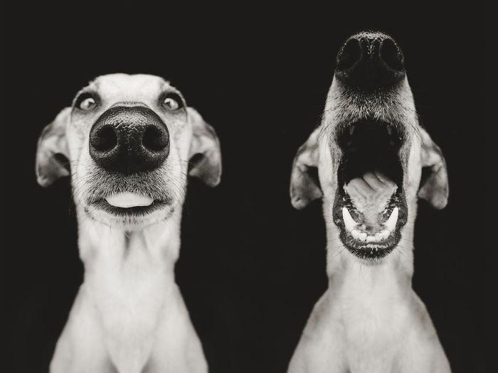 perros expresivos 15