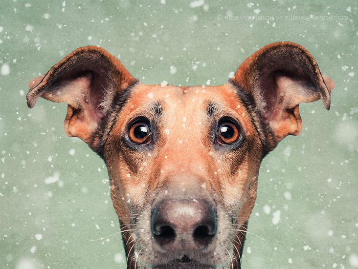 perros expresivos 16