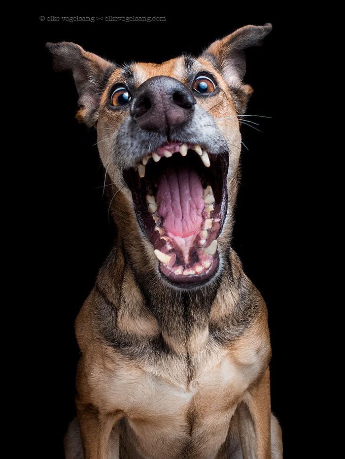 perros expresivos 3