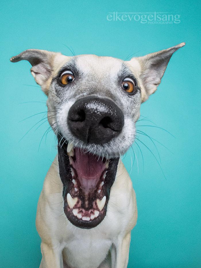 perros expresivos 5