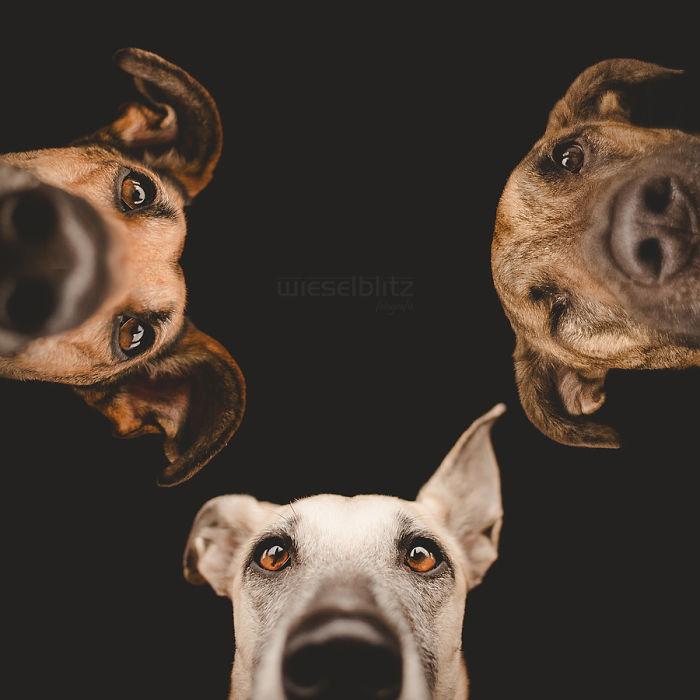 perros expresivos 6