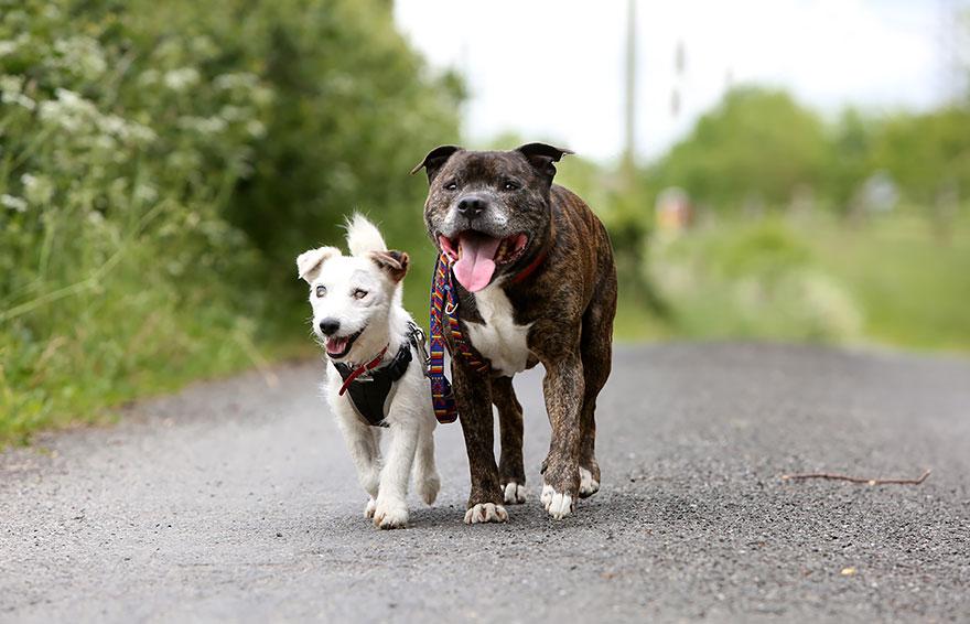 perros-guia