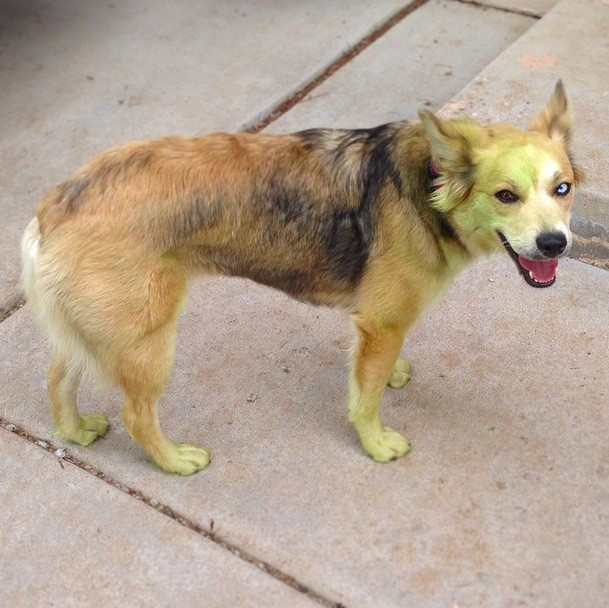 perros verdes 11