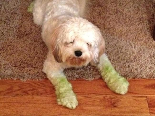perros verdes 13