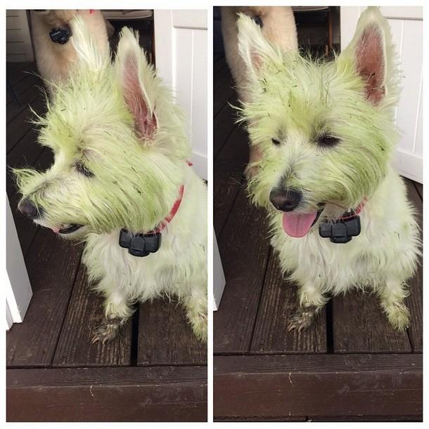 perros verdes 14