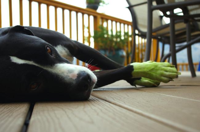 perros verdes 15