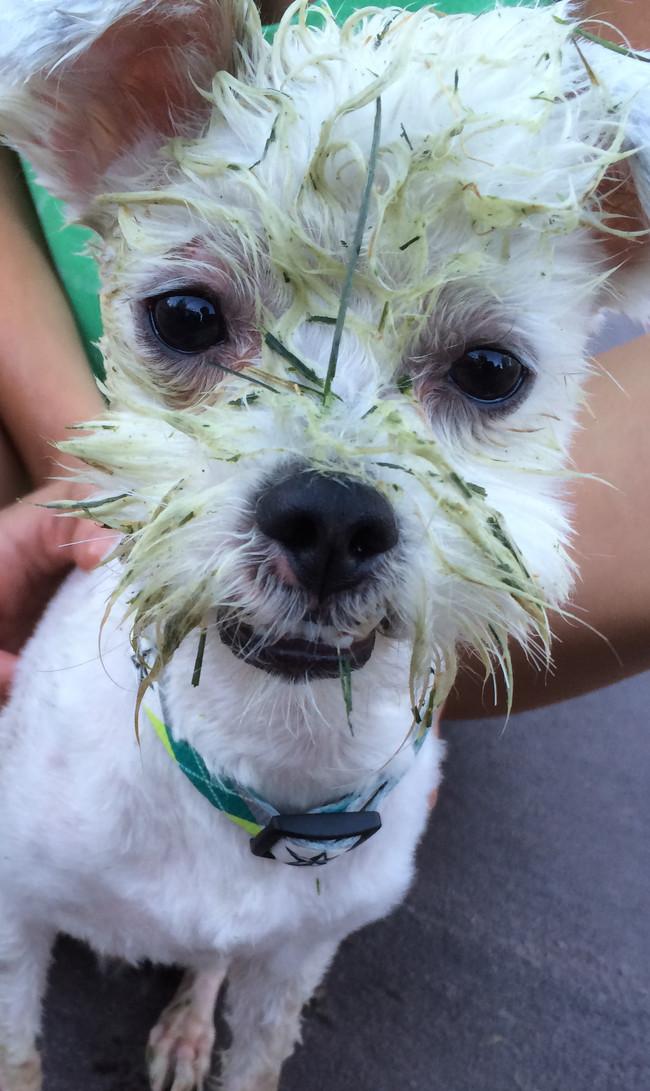 perros verdes 16