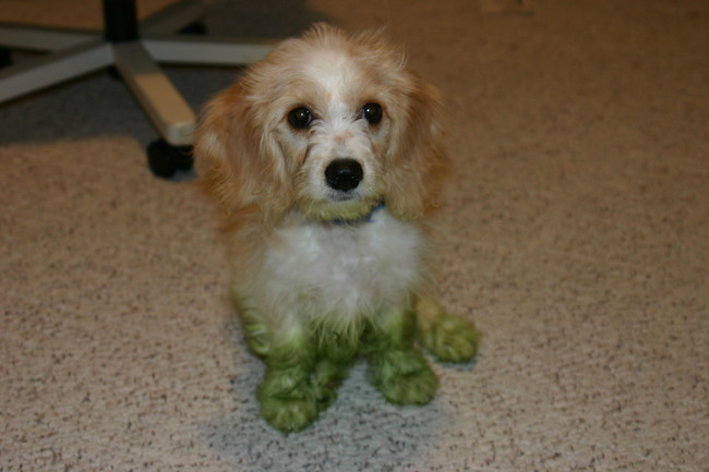 perros verdes 17
