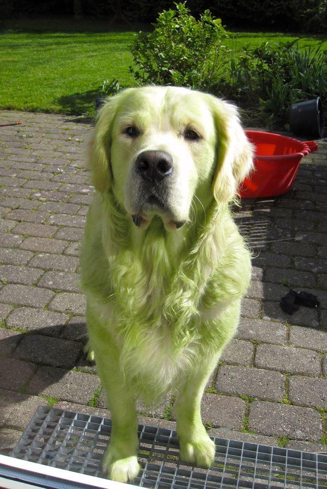 perros verdes 19
