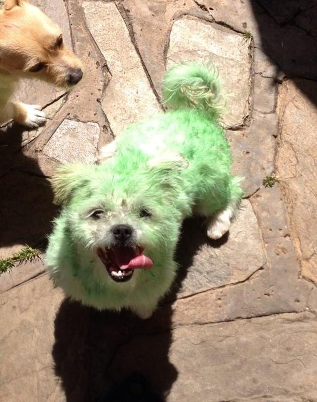 perros verdes 21