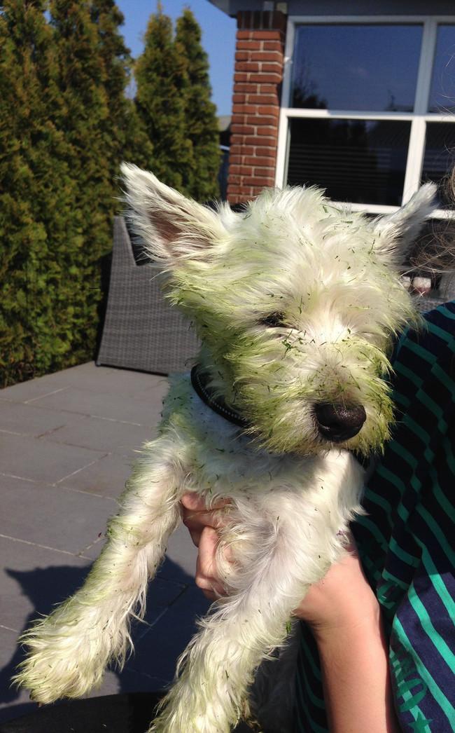 perros verdes 23