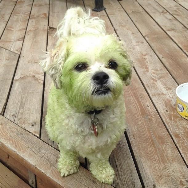 perros verdes 9