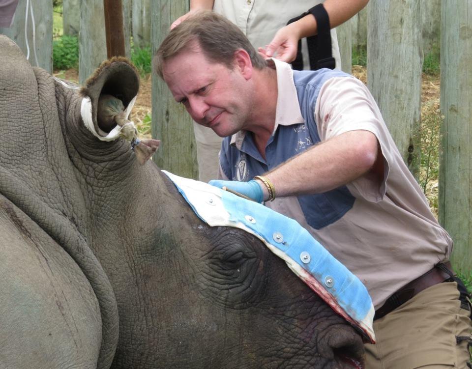 rinoceronte-rescatado