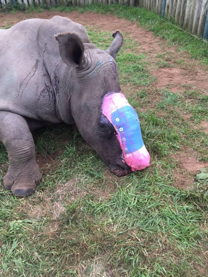 rinoceronte-rescate