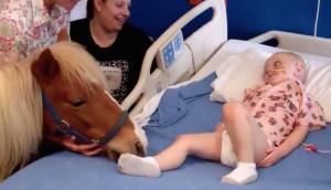 visita-pony-hospital-nino