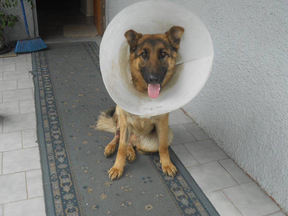yuli recuperacion