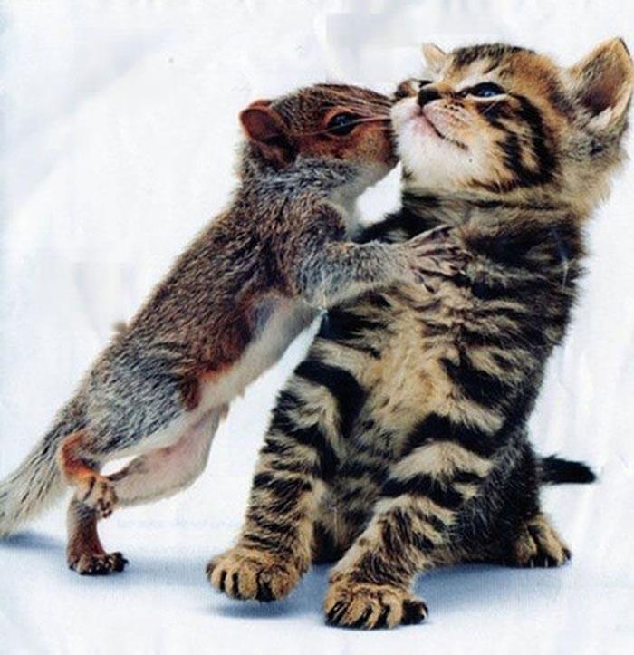 abrazo animal 1