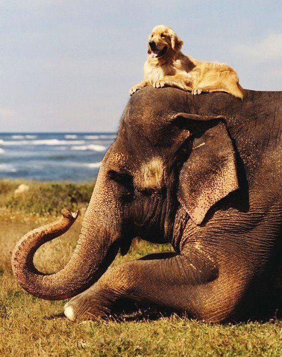 abrazo animal 10