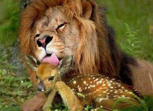 abrazo animal 11