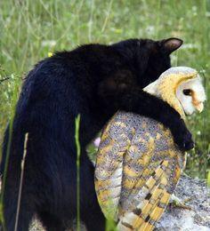 abrazo animal 12