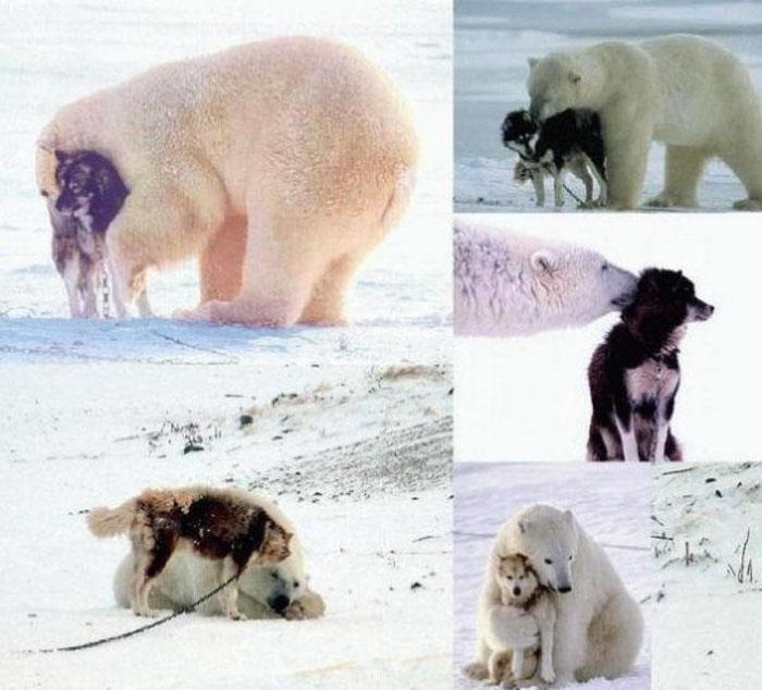 abrazo animal 3