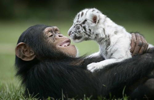 abrazo animal 6