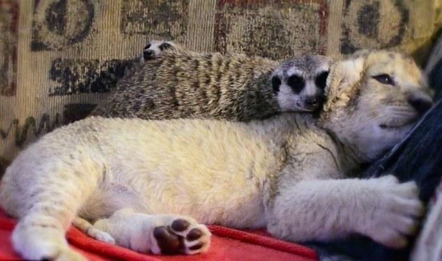 abrazo animal 7