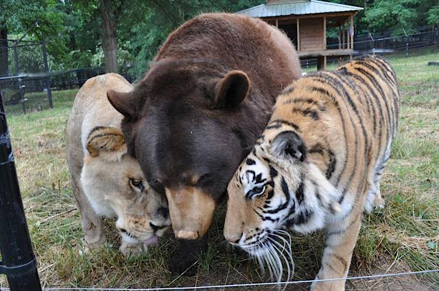 abrazo animal 8